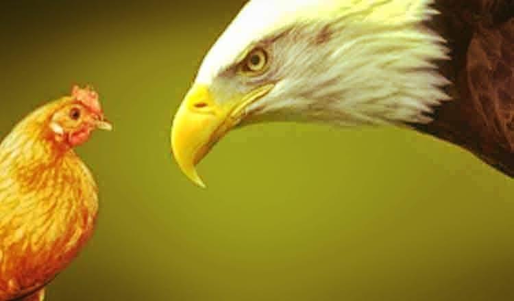 De reflectat: vultur, gaina, om, pui …